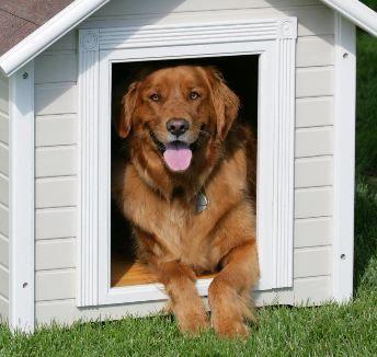Confraria do Cão - Hotel para Cães