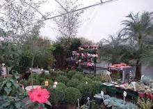 Floricultura Casa Verde Garden Center