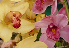 Floricultura Hortiflores